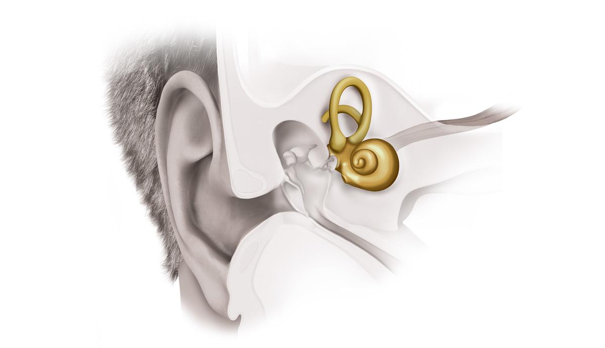 Ucho wewnętrzne