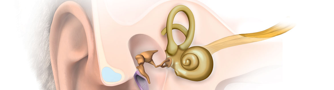 ear-anatomy (2)