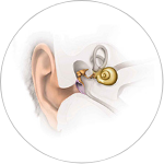Conductive and Mixed Hearing Losses