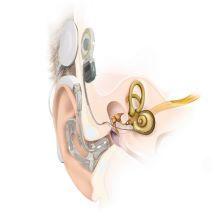 EarAnatomy_SYNCHRONY_EAS_DL-Coil_RW